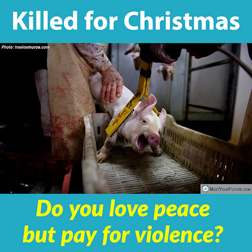 Do You Love Peace But Pay For Violence? | Meat Your Future