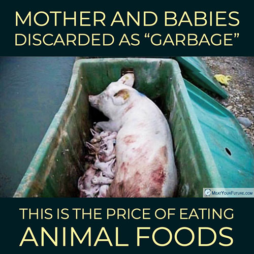 "Mothers and Babies Discarded as ""Garbage"" 