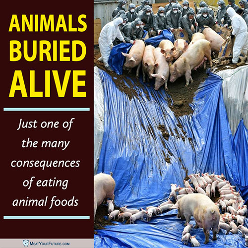 Animals Buried Alive - One Consequence of Eating Animal Foods | Meat Your Future