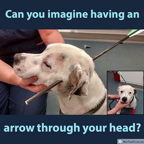 Can You Imagine Having an Arrow Through Your Head? | Meat Your Future