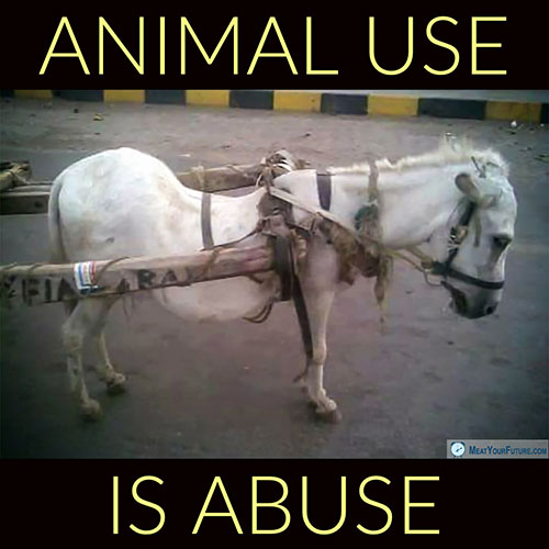 Animal Use is Animal Abuse | Meat Your Future