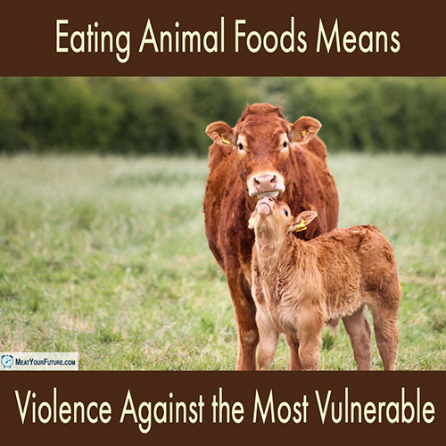 Eating Animal Foods Means Violence Against the Most Vulnerable | Meat Your Future