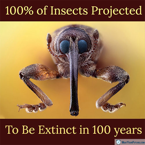 100% of Insects Projected to be Extinct in 100 years | Meat Your Future