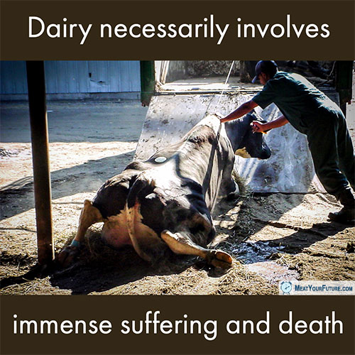 Dairy Necessarily Involves Immense Suffering and Death | Meat Your Future