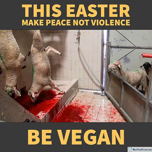 This Easter Make Peace Not Violence - Be Vegan | Meat Your Future