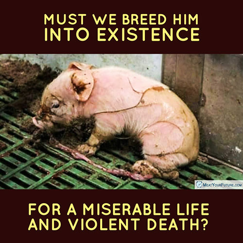 Must We Breed Him Into Existence for a Miserable Life and Violent Death? | Meat Your Future