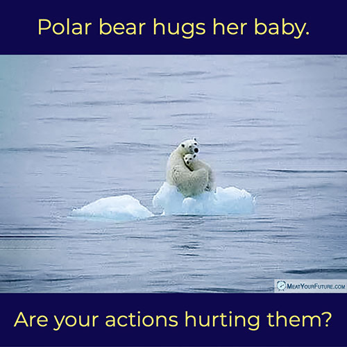 Polar Bear Hugs Her Baby - Are Your Actions Hurting Them? | Meat Your Future