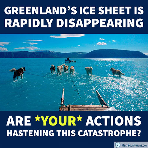Greenland's Ice Sheet Is Rapidly Disappearing | Meat Your Future
